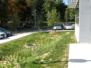 Bioswale--filters, drains, and stores water