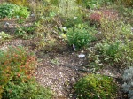 Bog garden irrigated by underground drip lattice