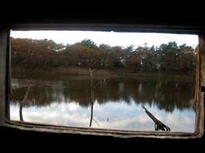 Watching from the blind, as kingfishers dive for food